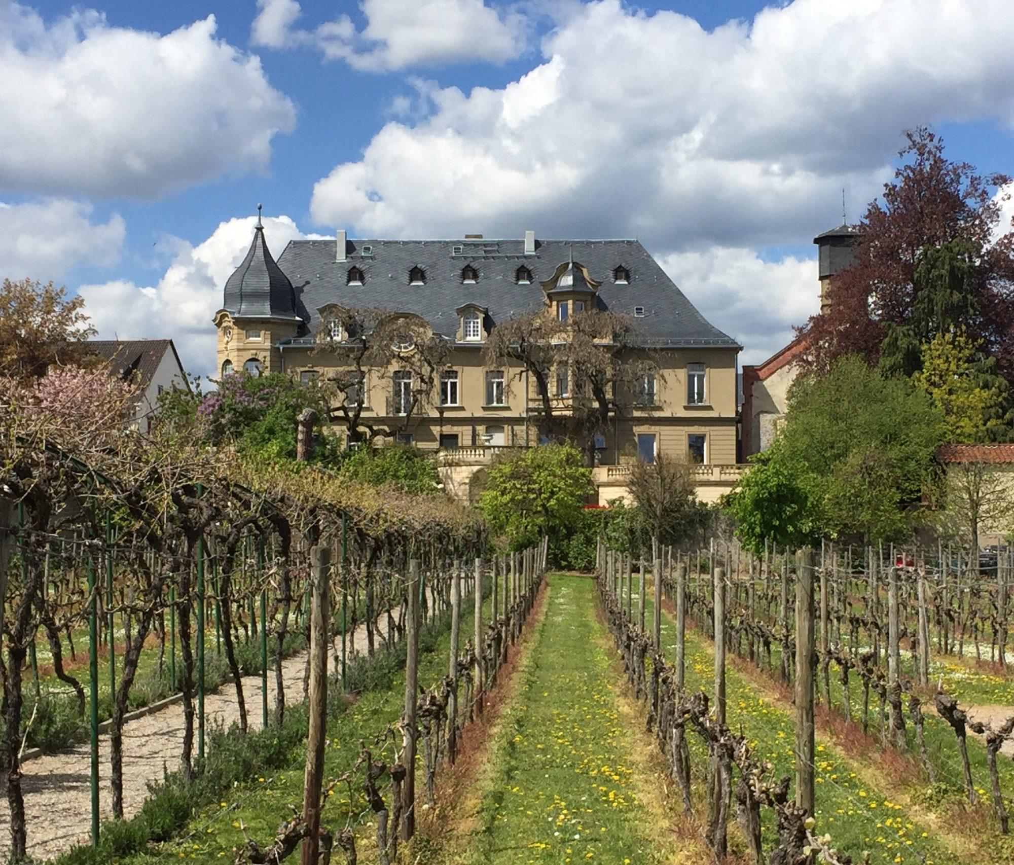 CDC I Clos De Chapelle I Weinhandel